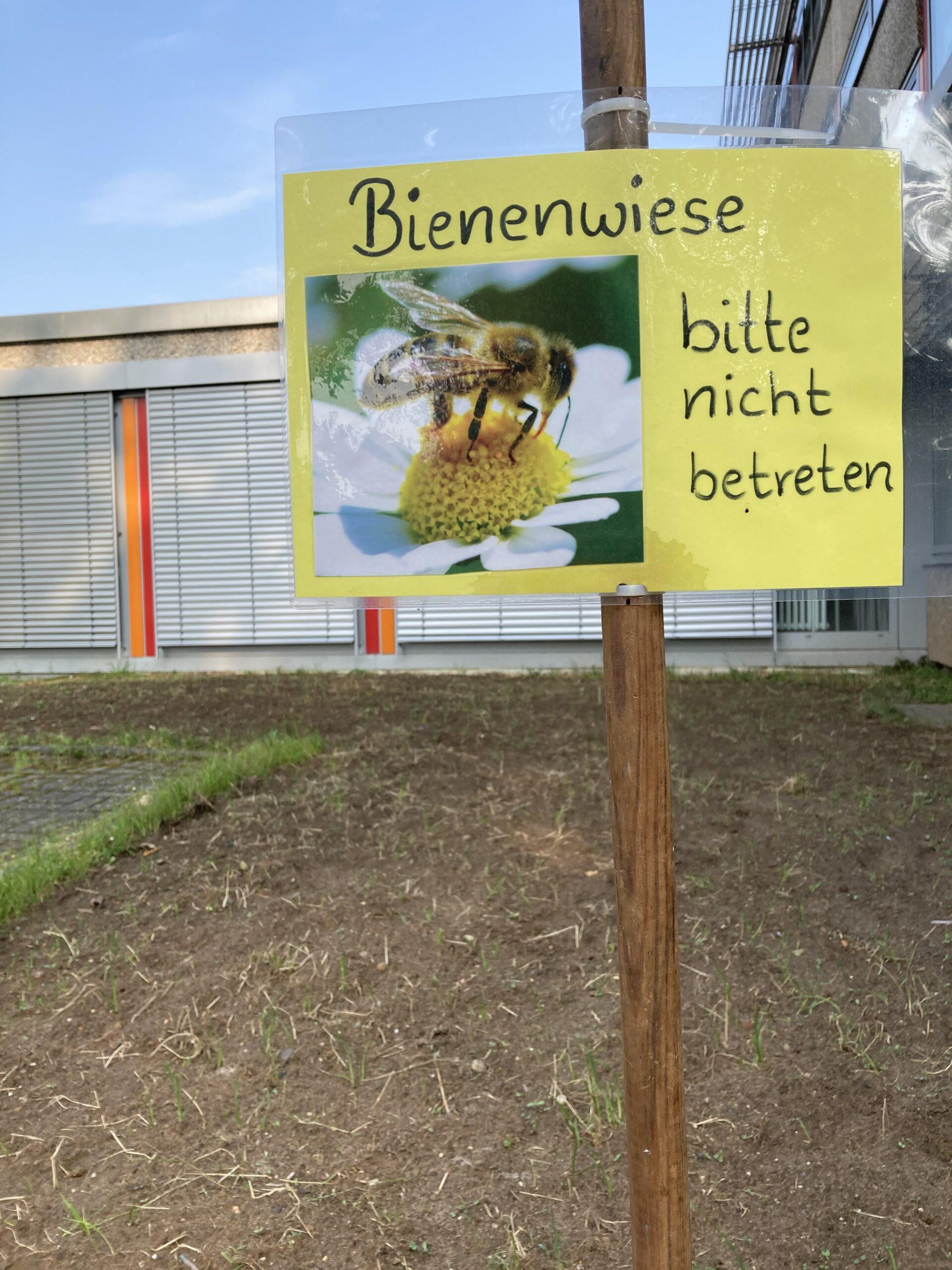 """Der Comenius-Garten wird jetzt auch zum """"Bienenbuffet"""""""